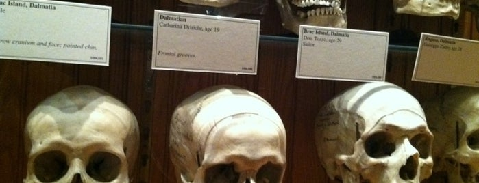 Great places for museum mysteries