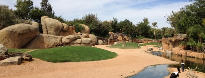 Bioparc is one of Valencia.