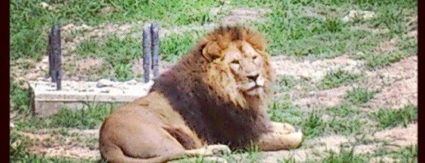 Zoológico Guadalajara is one of Guadalajara, MX.