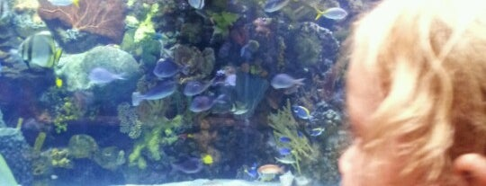 The Mirage Aquarium is one of app check!.