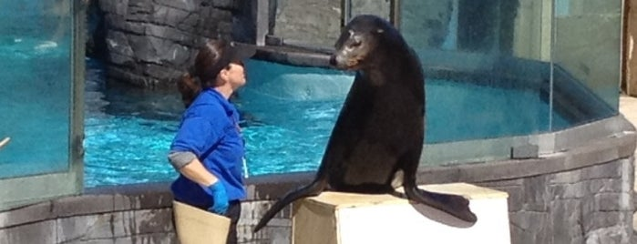 Long Island Aquarium & Exhibition Center (Atlantis Marine World) is one of NYC & Long Island.