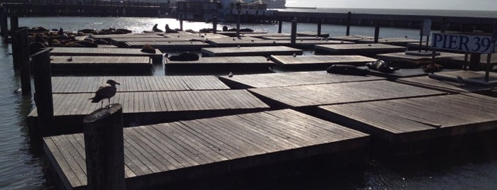 Sea Lions at Pier 39 is one of 101 places to see in San Francisco before you die.