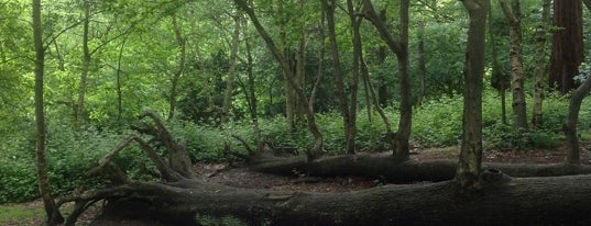 Oxleas Wood is one of Ancient woodland in London.