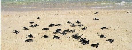 Turtle Island (Pulau Penyu) is one of DENPASAR - BALI.
