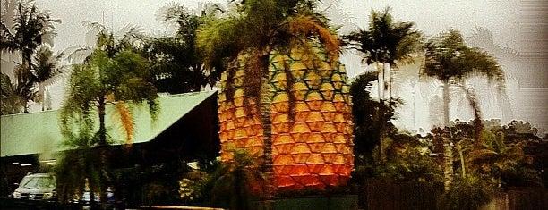 Big Pineapple is one of Big Things.