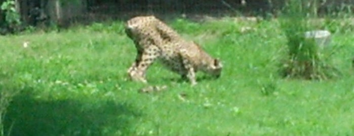 Cheetah Conservation Station is one of Washington, DC.