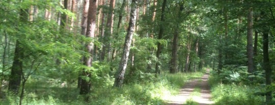 Forst Grunewald is one of Berlin!.