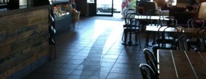Starbucks is one of Lieux qui ont plu à Maggie.