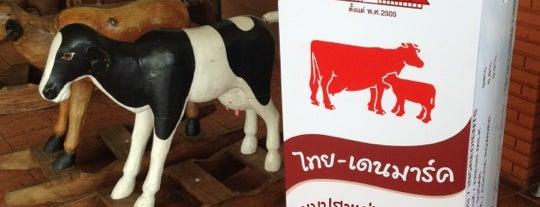 Thai-Denmark farm is one of สระบุรี, นครนายก, ปราจีนบุรี, สระแก้ว.