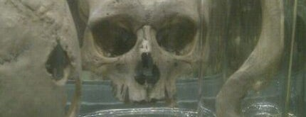 Hunterian Museum is one of Things to do in Europe 2013.