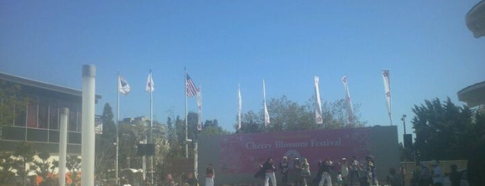 Northern California Cherry Blossom Festival is one of San Francisco!.