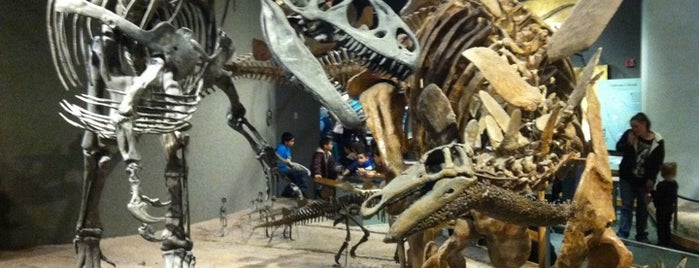 Denver Museum of Nature and Science is one of rockin' the Rockies..