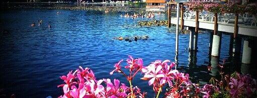 Hévízi-tó is one of Tempat yang Disukai Galia.