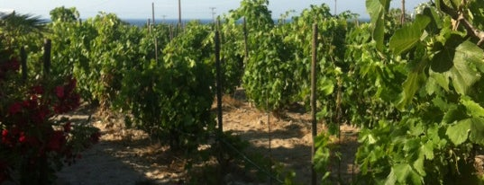 Boutari Winery is one of 5 days in Santorini.