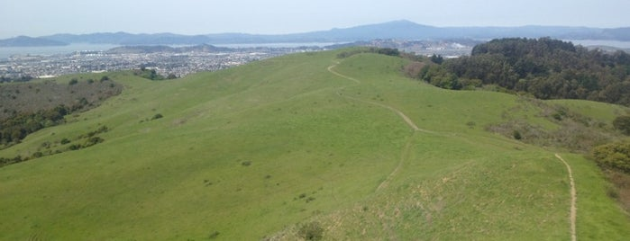 Wildcat Canyon Regional Park is one of East Bay faves.
