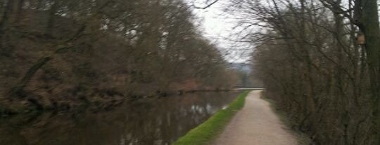 Leeds - Liverpool Canal is one of Dog Walking Spots in Yorkshire.