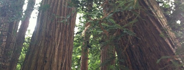 Muir Woods National Monument is one of 101 places to see in San Francisco before you die.