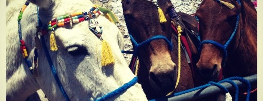 Donkey Taxis is one of Santorin's Attractions.