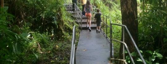 Akaka Falls State Park is one of My Big Island.