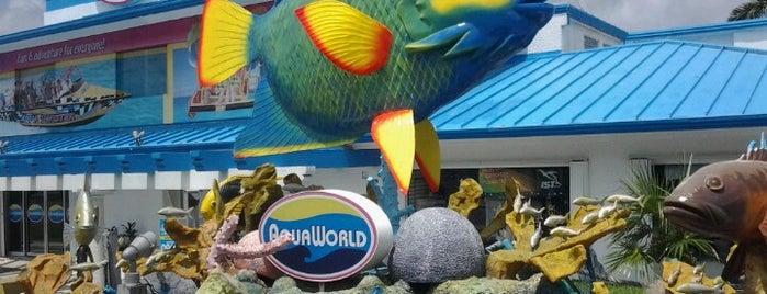 Aquaworld Marina is one of Канкун что посмотреть?.