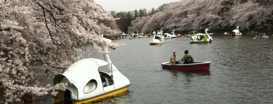 Inokashira Park is one of Tokyo as a local.