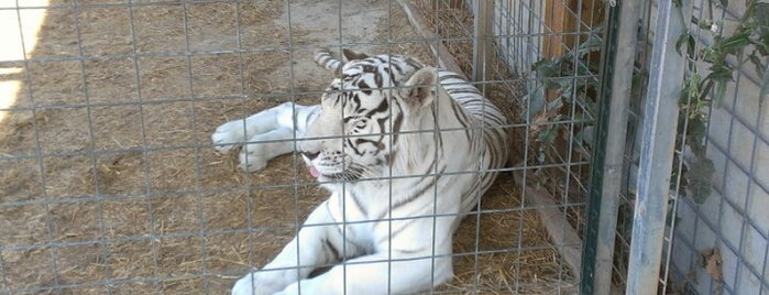 National Tiger Sanctuary is one of Brkgny 님이 좋아한 장소.