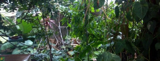 Tropical Rain Forest is one of To do.