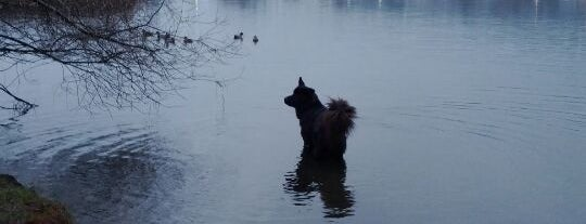 Divers Lake is one of Dog Parks.