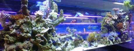 Aquarium Depot is one of Miami - To Visit.