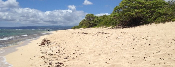 Mokuleia Beach is one of Favorite Local Kine Hawaii.
