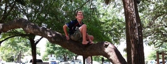 Gregg Russell under the Great Oak is one of Hilton Head Kids Activities.