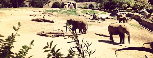 San Diego Zoo Safari Park is one of SoCal Musts.