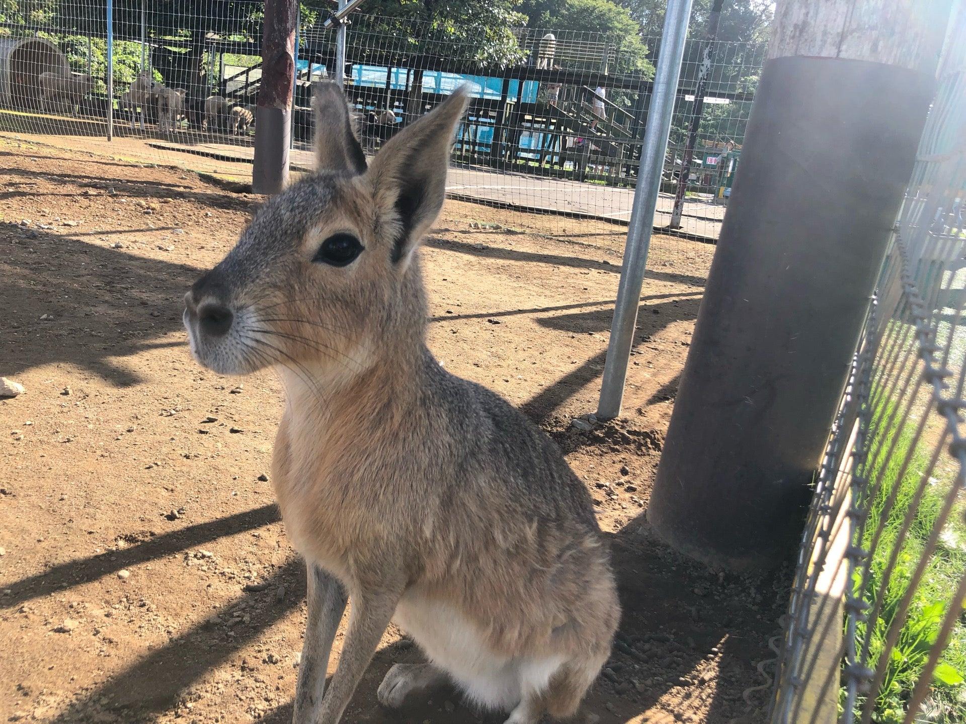 東京ドイツ村 こども動物園