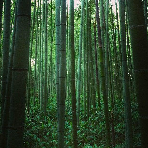 嵐山 竹林之道
