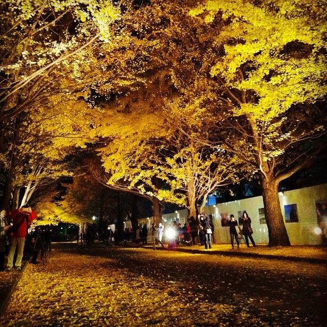 北海道大學銀杏並木