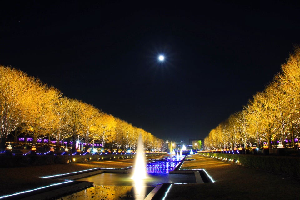 國營昭和記念公園 Winter Vista Illumination