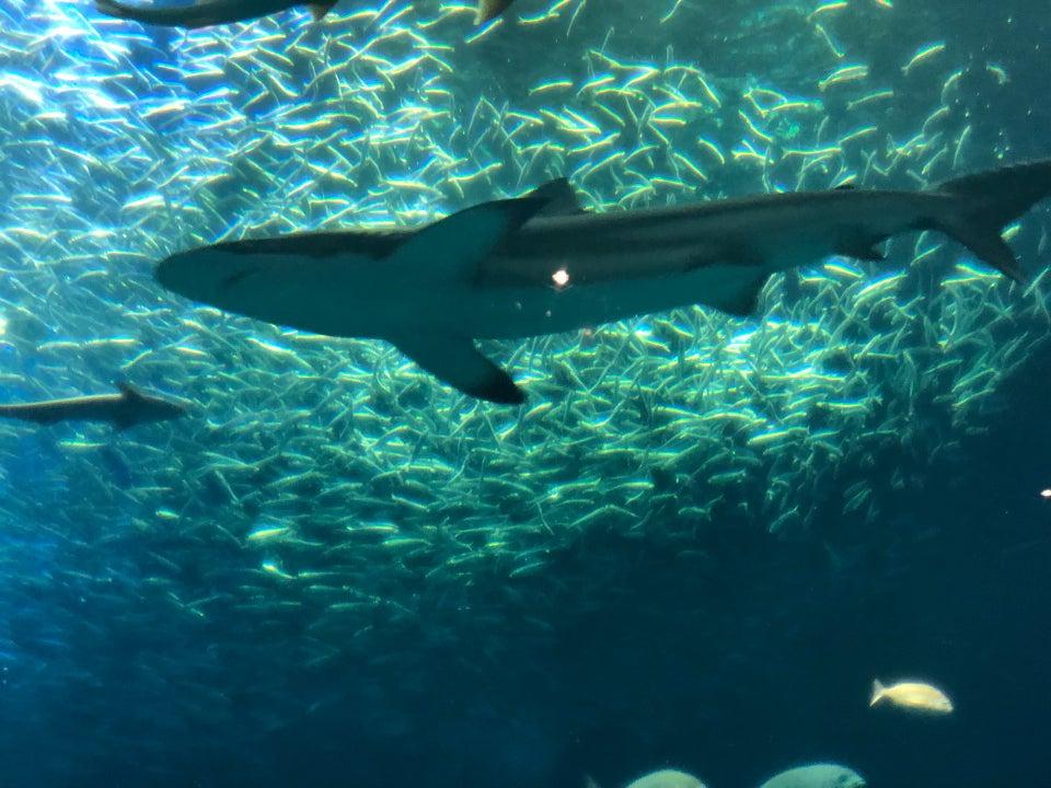 Aqua World 大洗(茨城)