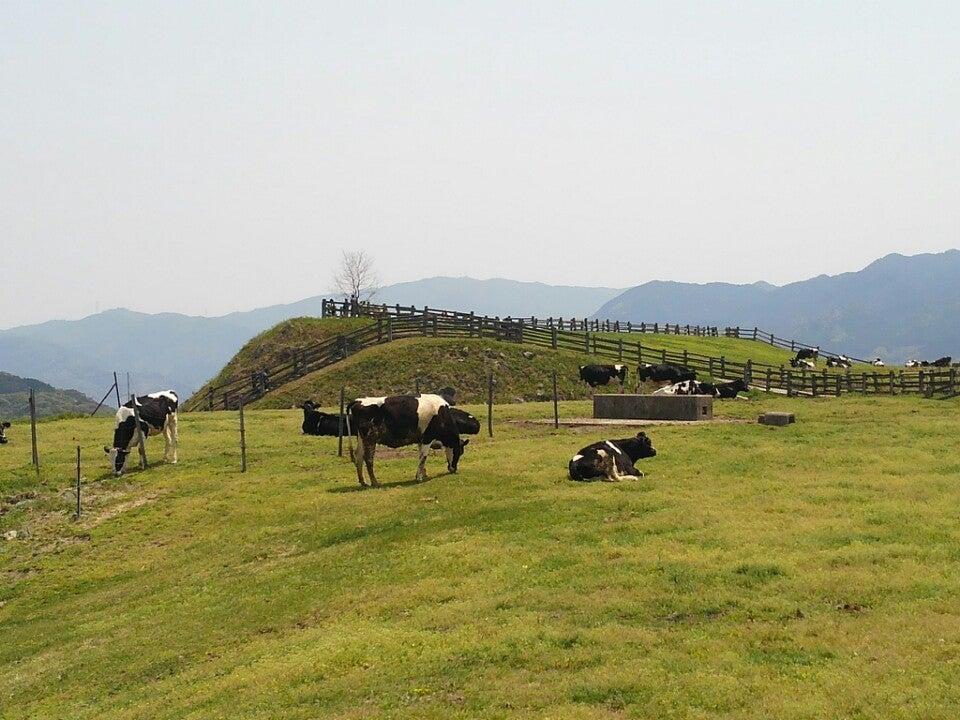 哞哞樂園農場