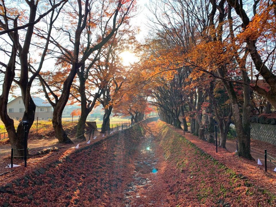 河口湖楓葉迴廊 紅葉祭