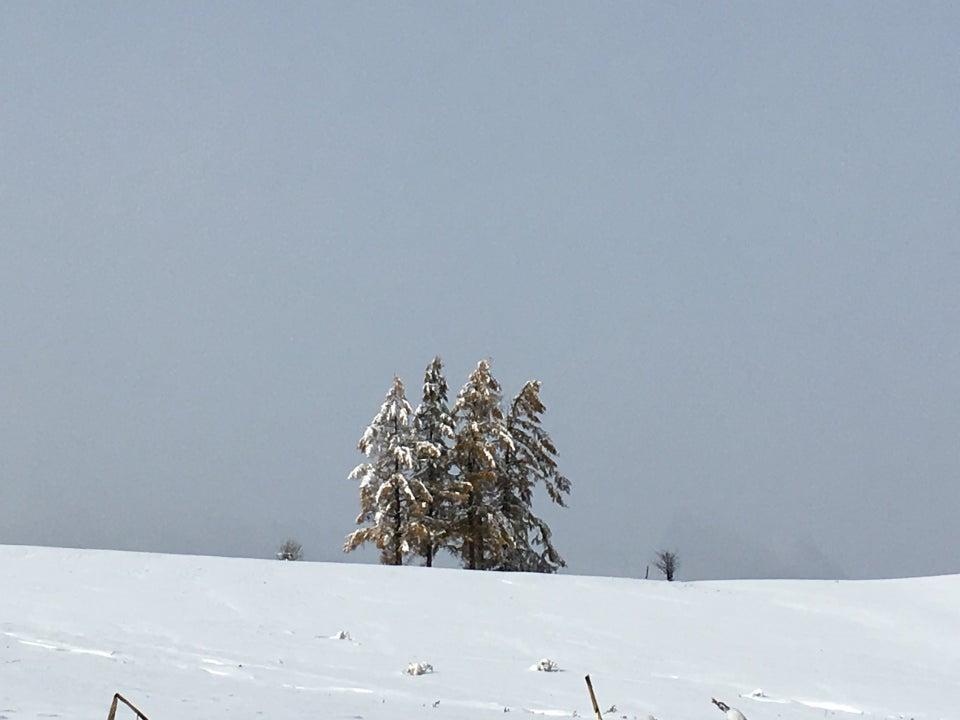 北海道 上富良野‧美瑛 5本樹