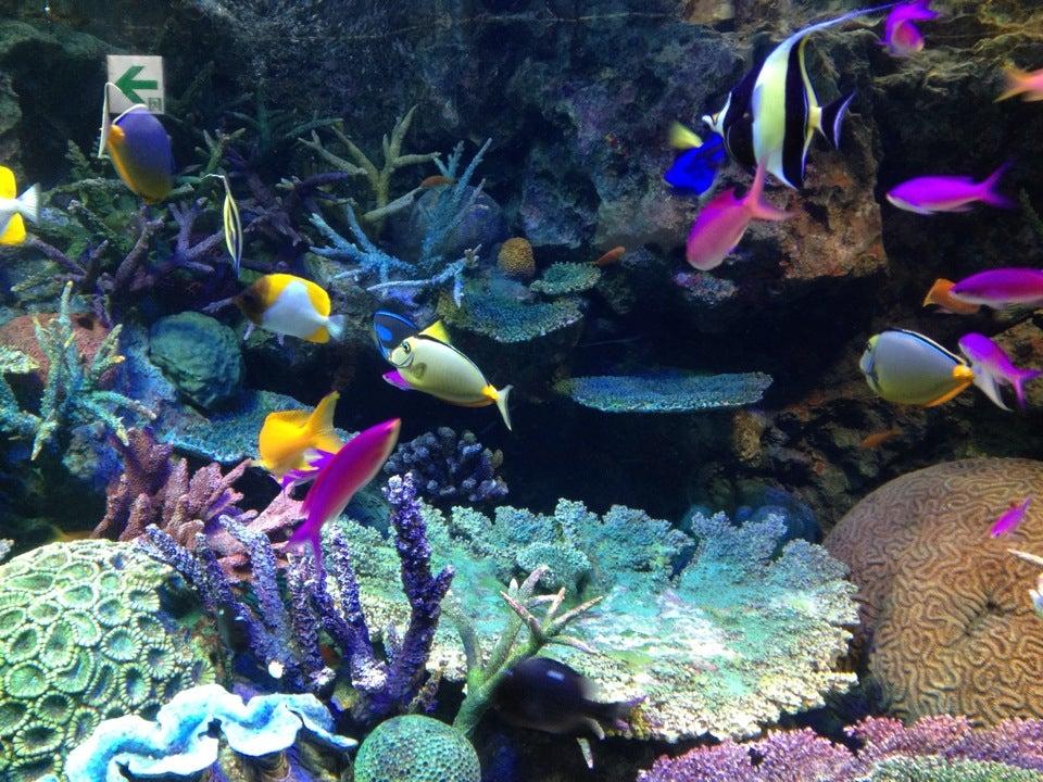 Sunshine Aquarium陽光水族館(池袋)