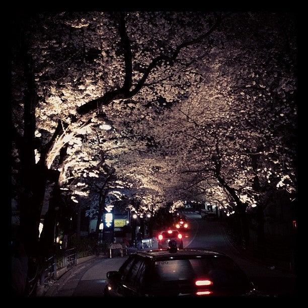 赤坂 方舟之丘Ark Hills櫻花道
