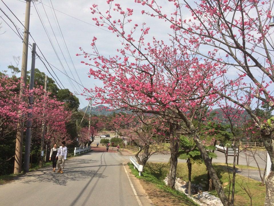 八重洲櫻之森公園