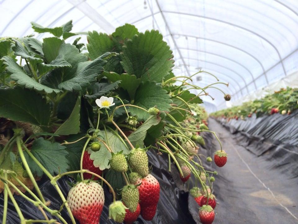 日光草莓園