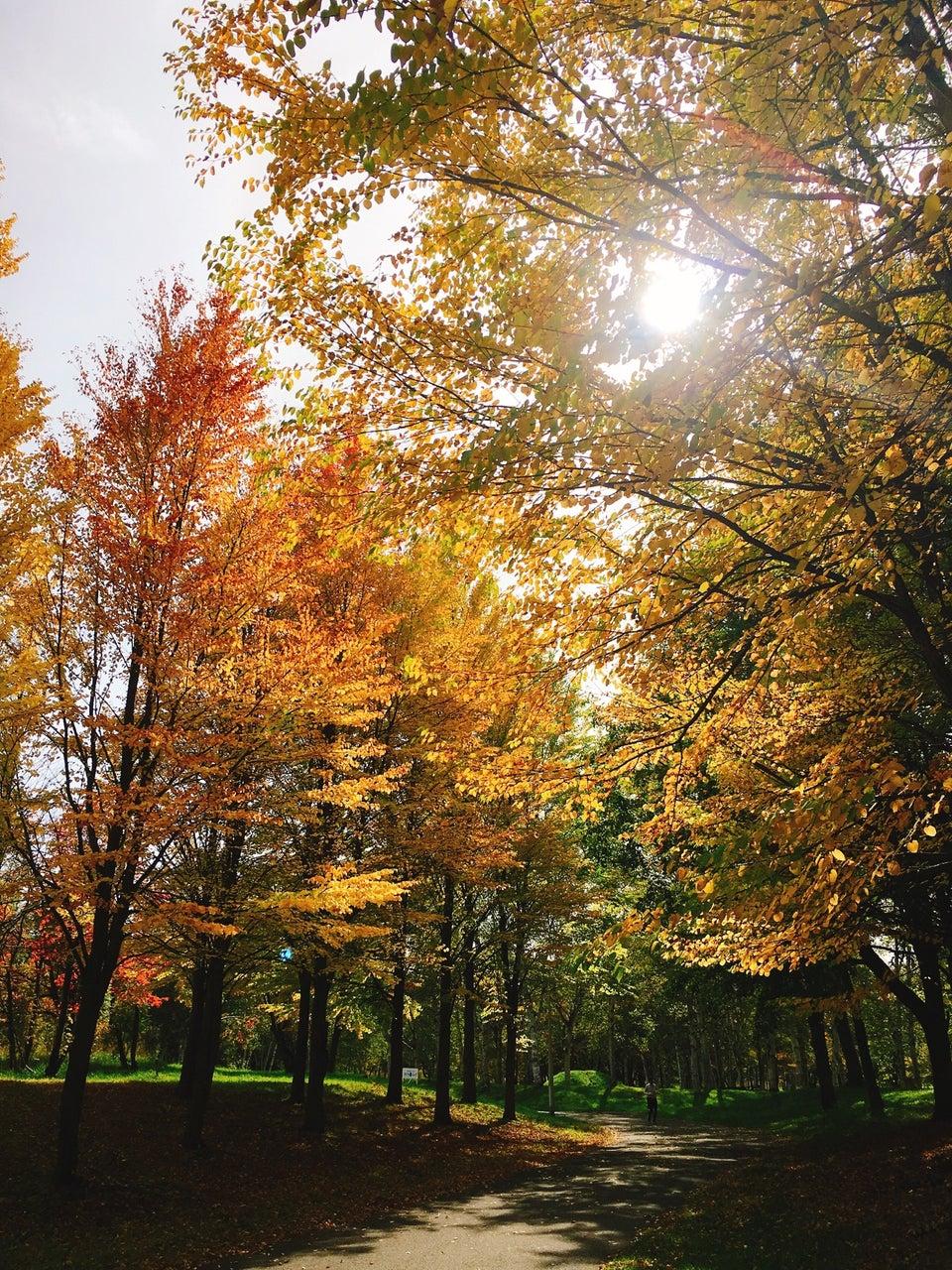 真駒內公園