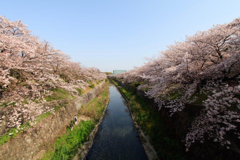 山崎川四季之道