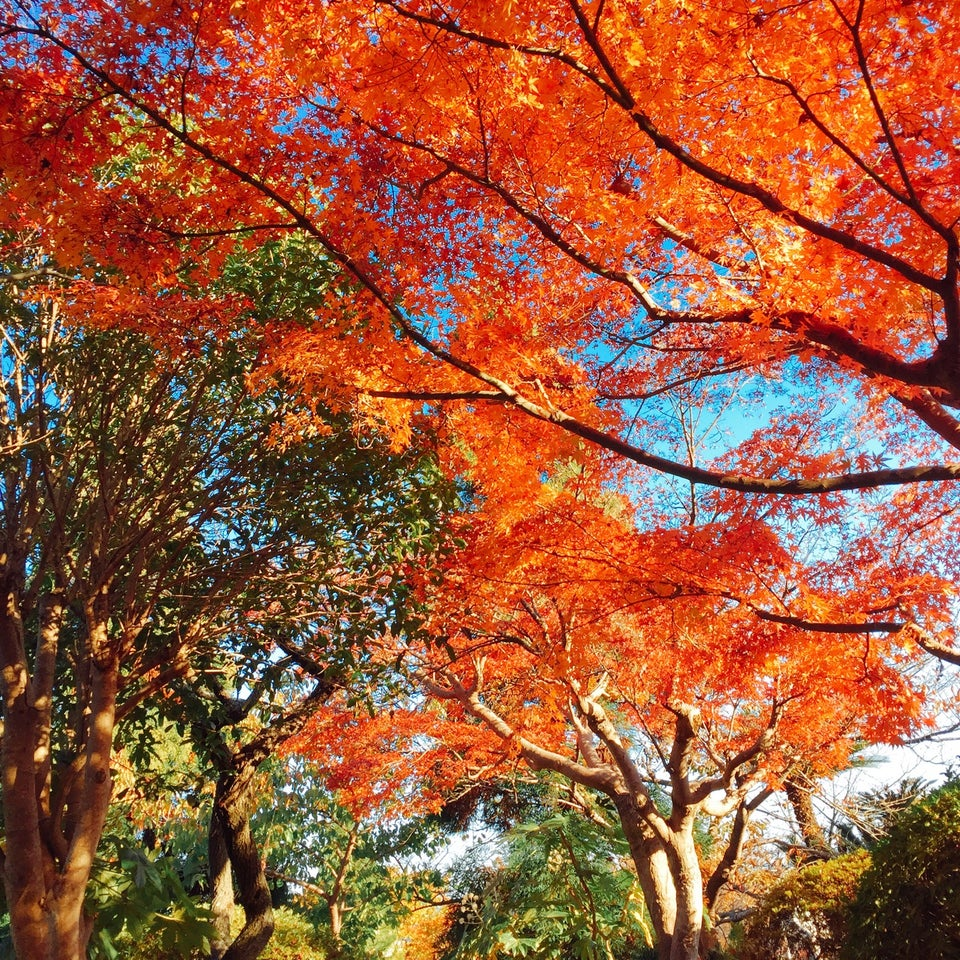 白野江植物公園(門司)