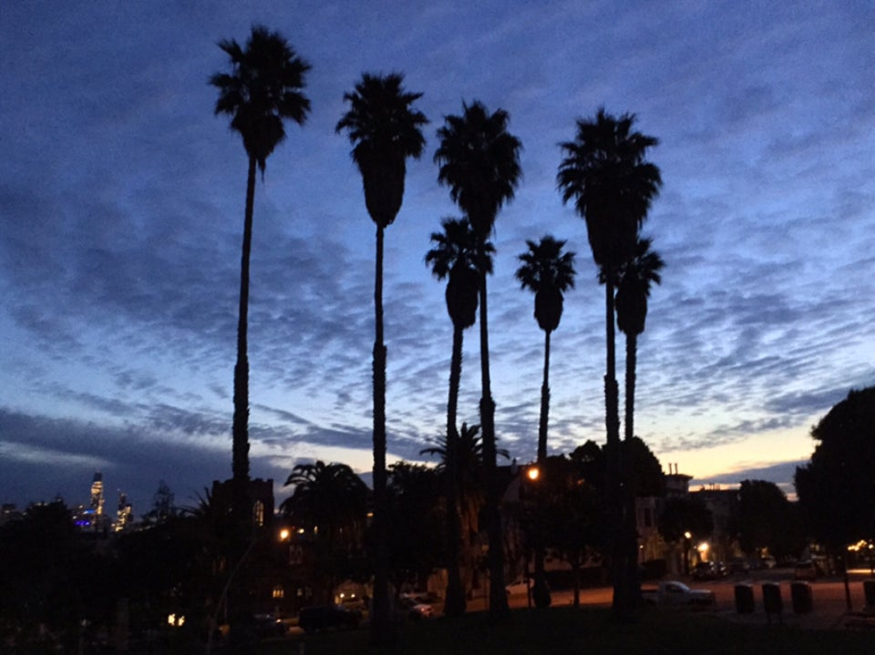 Spotted clouds in the pre-dawn blue sky, above seven palm trees being backlit in Dolores Park.