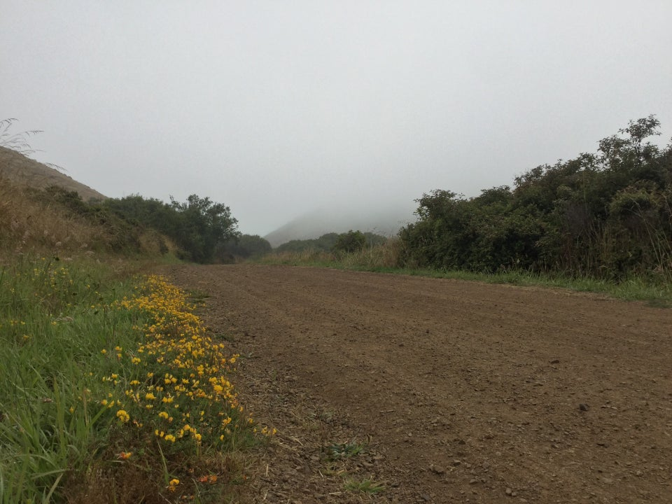 Yellow flowers along the side of Miwok, trees on the other side, and a hill in the distance disappearing into the fog