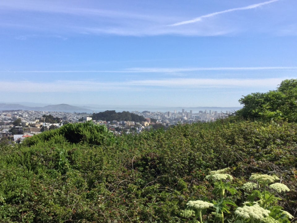 Hazy sky over a view of downtown San Francisco, Buena Vista park with dark green trees, and a row of bushes in the foreground.